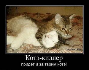 Кот киллер