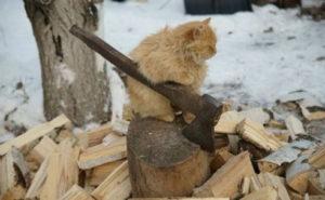 Кот с автоматом
