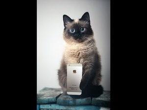 Кот с IPhone