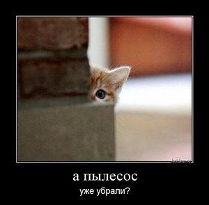 Кот следит