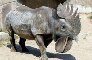 Носорог и питух