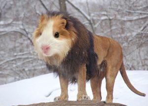 Лев и хомяк