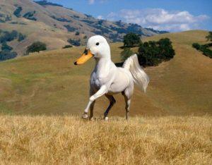Конь и утка