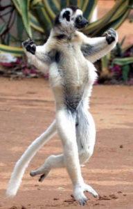 Лемуы фото танцы