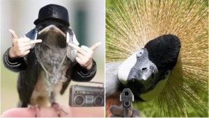 Крутые птички