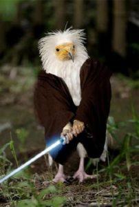 Птица воин