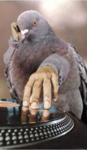 Птица-диджей