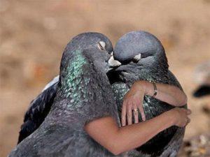 Птичья любовь