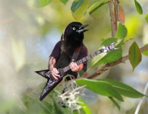 Птица с гитарй