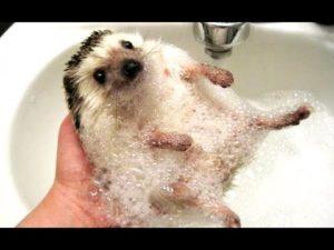 Ежик в ванной