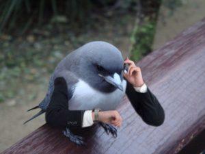Деловая птица
